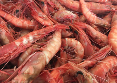 Royal-Red-Shrimp